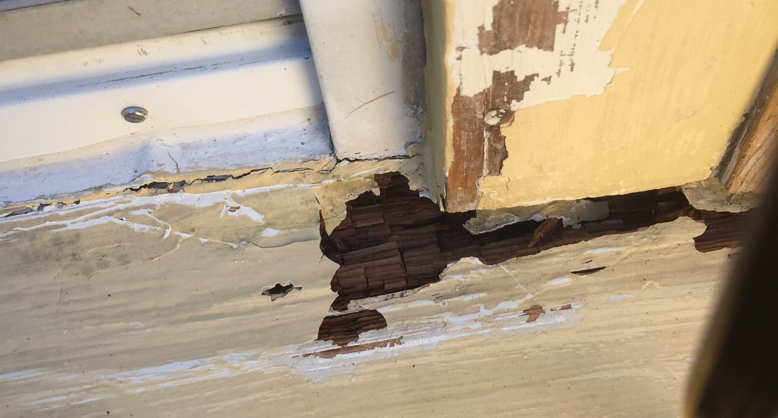 Finding wood rot